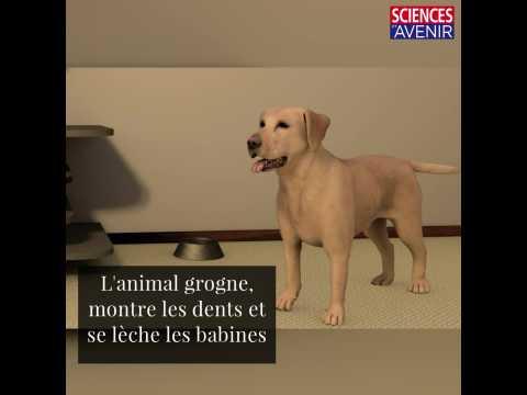 Un chien virtuel pour aider à prévenir les morsures