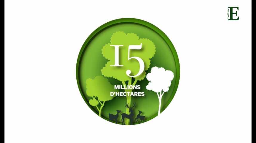 Illustration pour la vidéo Déforestation : quelle est l'empreinte écologique des importations de la France ?