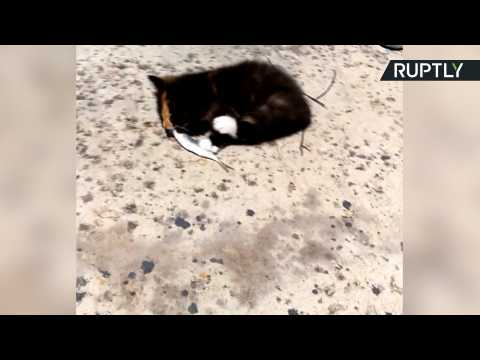Kitten Overboard! Shivering Kitty Rescued From Sea