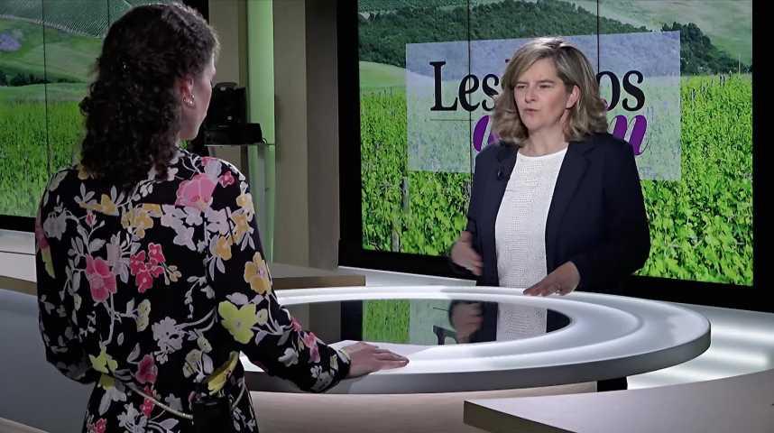 Illustration pour la vidéo Vins de Bordeaux : les coulisses du nouveau classement des crus bourgeois