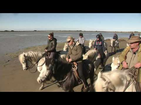 France's Camargue region, a land of marshes, bulls and horses
