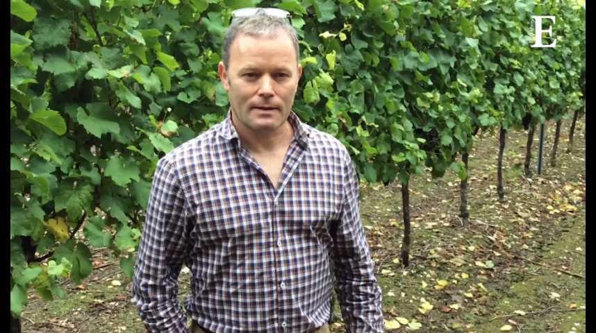 """Illustration pour la vidéo Didier Pierson : un """"frenchy"""" vigneron en terres anglaises"""