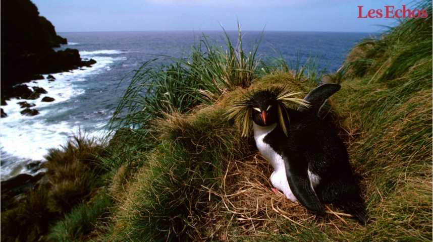 Illustration pour la vidéo La moitié des vertébrés menacés d'extinction vivent sur des îles