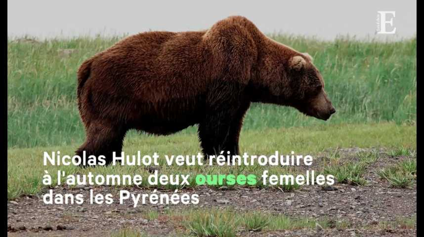 Illustration pour la vidéo Réintroduction des ours : Hulot s'engage sur un sujet qui fâche