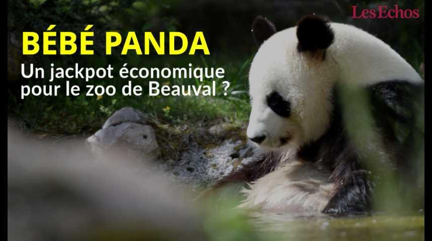 Illustration pour la vidéo Bébé panda à Beauval : un jackpot économique pour le zoo ?