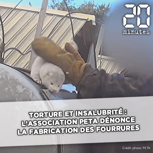 Maltraitance et insalubrité : L'association PETA dénonce les conditions de fabrication des fourrures