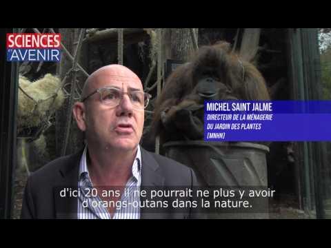 Campagne de parrainage des orangs-outans au zoo du Jardin des Plantes (MNHN)