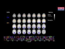CERVEAU. Nouvelle technique pour visualiser les comportements
