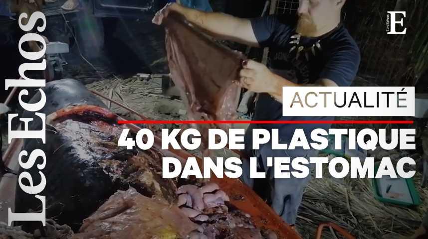 Illustration pour la vidéo Pollution : une baleine meurt aux Philippines, victime du plastique