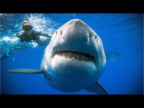 Giant Severed Shark Head Found
