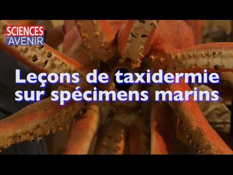 REPORTAGE. Leçons de taxidermie sur spécimens marins au Museum National d'Histoire Naturelle