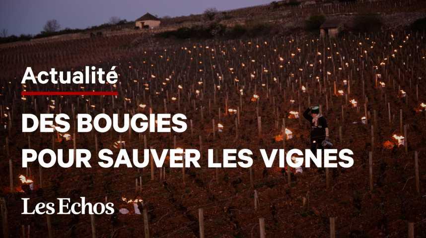 Illustration pour la vidéo Des « bougies » pour sauver les vignes du gel