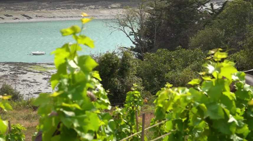 Thumbnail Ils se reconvertissent dans les vignes en Bretagne