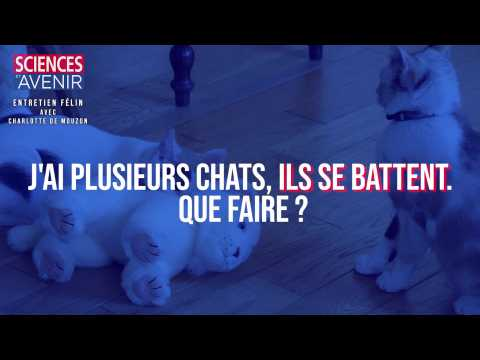 Mes chats se battent, que faire ?