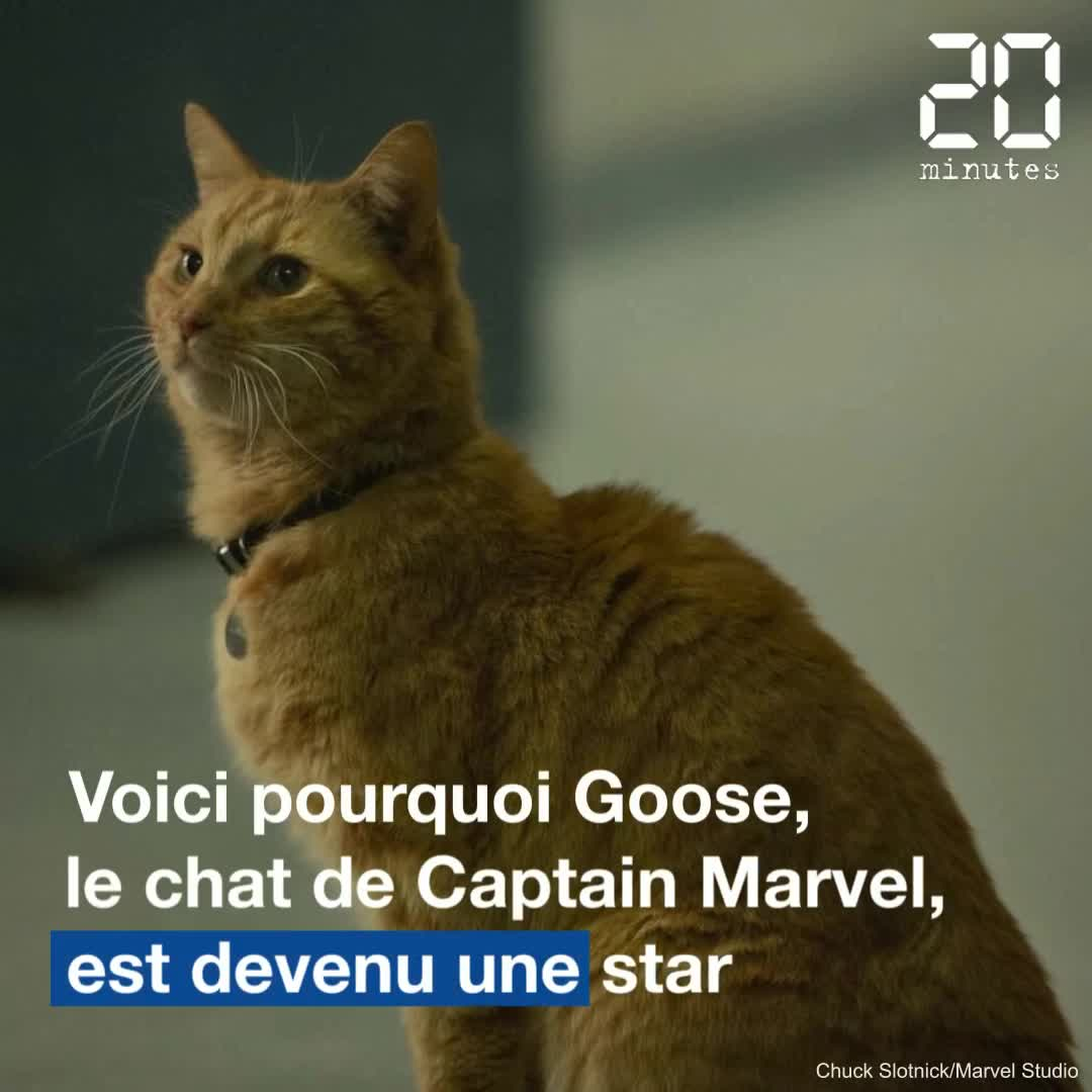 VIDEO. Trois raisons qui ont transformé le chat de Captain Marvel en star