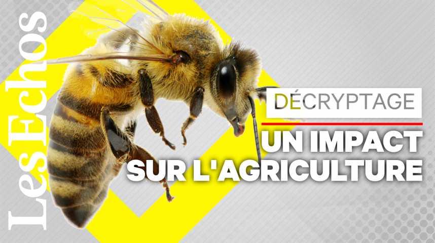 Illustration pour la vidéo Le déclin des abeilles pourrait coûter cher