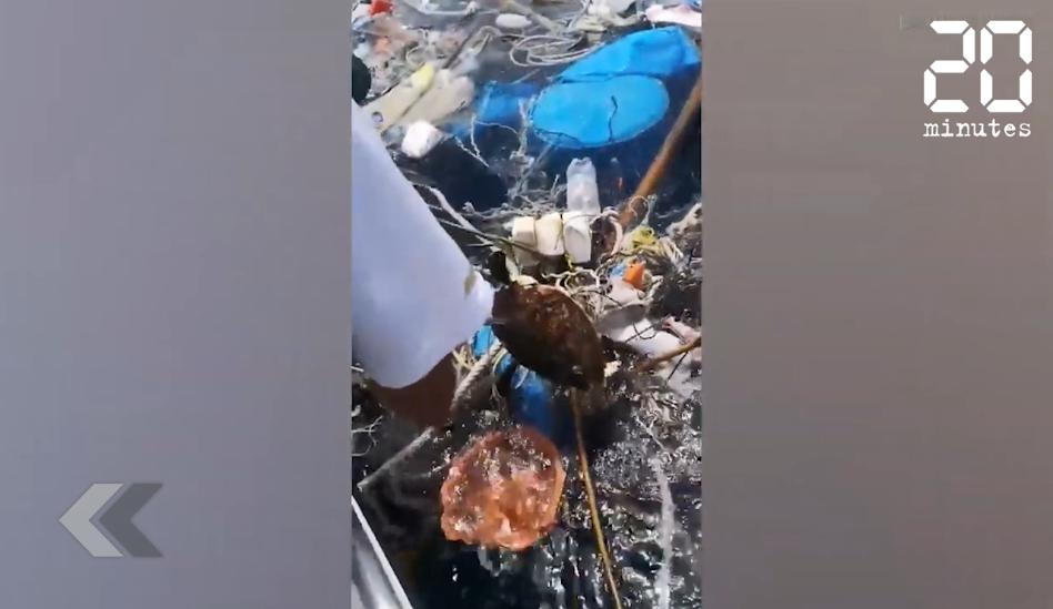 Thaïlande: Un pêcheur sauve deux tortues prises dans un filet de pêche