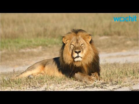 Jimmy Kimmel Tears Into 'A-hole' Dentist Who Killed Cecil The Lion