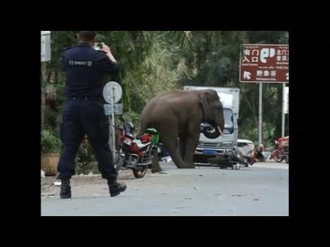Jilted elephant takes it out on tourists