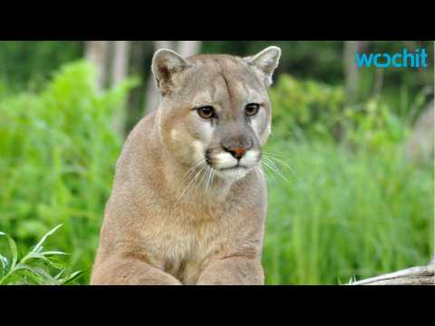 Mother Fights Off Mountain Lion Attack
