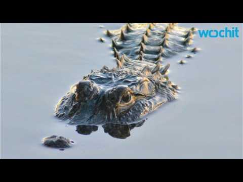 Body Found Being Eaten By Alligators