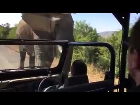 Movie star Schwarzenegger charged by elephant