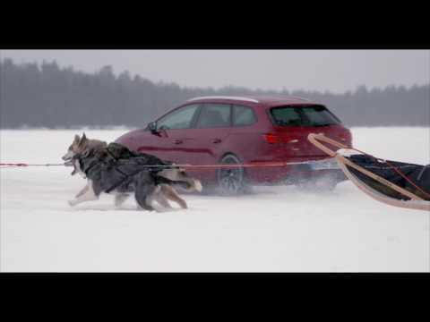 Seat Leon CUPRA - 6 huskies and 300 horses | AutoMotoTV