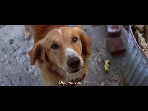 """Bande-annonce VOST """"Mes vies de chien"""""""