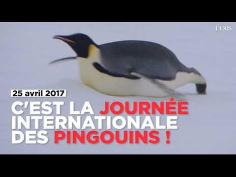 C'est la journée internationale des pingouins (et ils en ont bien besoin)