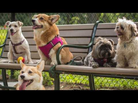 The Top 10 Most Beloved Dog Breeds In America