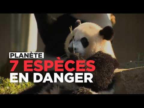 Ces 7 animaux qui risquent de disparaître