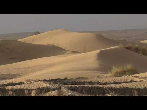 Morocco's oases fight back creeping desert sands