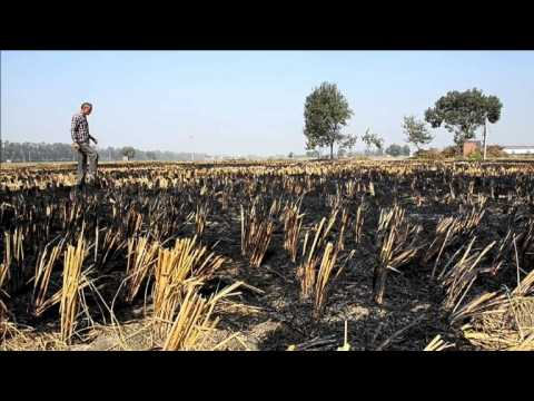 As Delhi chokes, farmers defend scorched earth policy