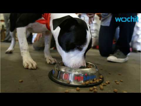 Dog Food Possibly Contaminated With Euthanasia Drug