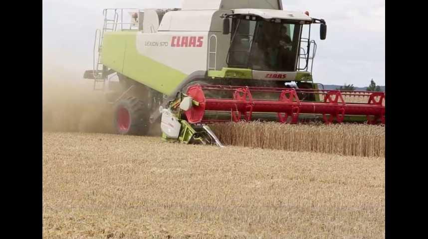 Illustration pour la vidéo Blé : la pire récolte depuis 30 ans en France