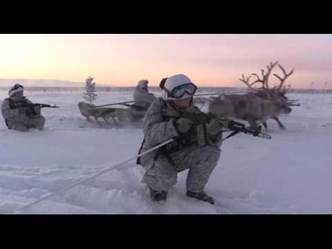 Pour l'Arctique, l'armée russe fait appel à des rennes