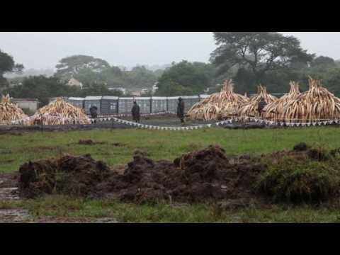 Kenya prepares to torch world's biggest ivory bonfire