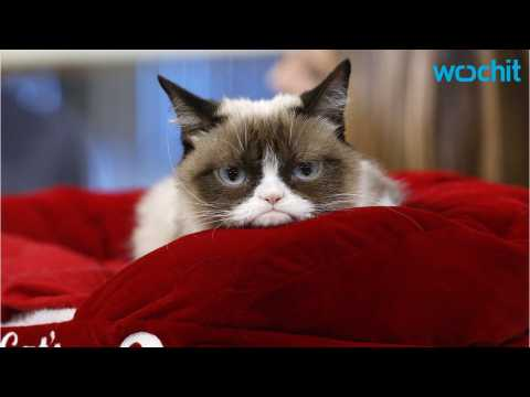 Grumpy Cat Will Be Joining A broadway Show