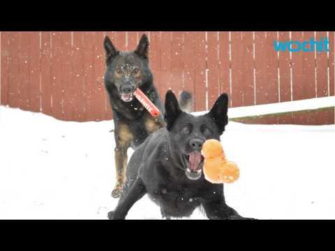 Guide To Training German Shepherd Puppies