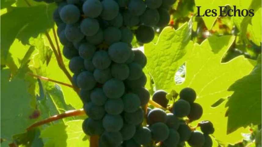Illustration pour la vidéo Pourquoi la production française de vin a chuté en 2016