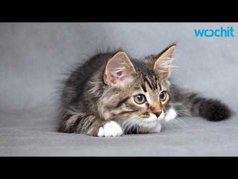 Cute Kitten Entertains Herself With a Piece of Tape