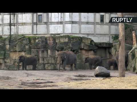 Berlin Zoo Celebrates as Edgar the Elephant Turns One