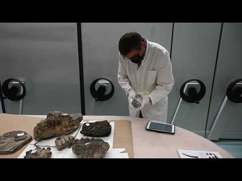 15-million-year-old fossils found in car boot go on display in Zagreb