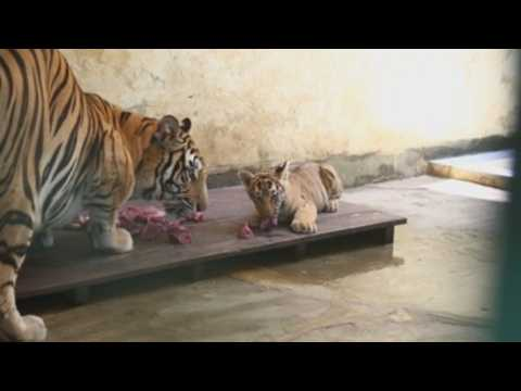 Bangladesh National Zoo reopens after five-month closure