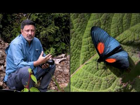 Colombia: Home to the world's largest variety of butterflies