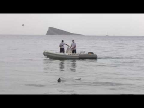 Disoriented blue shark ends up in Benidorm beach