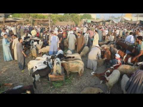 Egyptians in Giza buy livestock ahead of Eid al-Adha