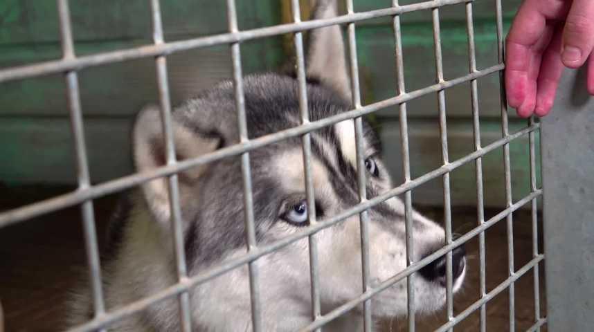 Thumbnail Animaux : après les adoptions, les abandons !