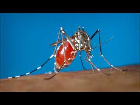 Puerto Rico Declares Zika Outbreak Over