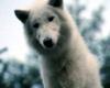 Survivre avec les loups - bande annonce - (2008)